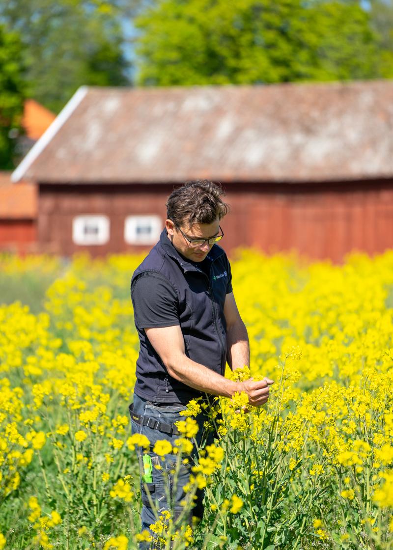 Godegården - regenerativt jordbruk